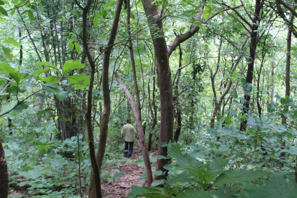krid_polo_forest